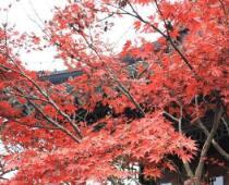 大美中国 杭州西湖初冬红枫惹人醉