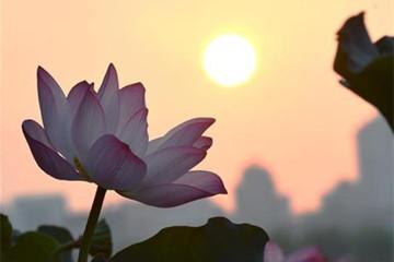 浙江杭州西湖之晨