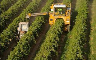加拿大农场发生一氧化碳泄露事件 40余人中毒送医