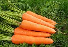 胡萝卜或可成为绿色建材