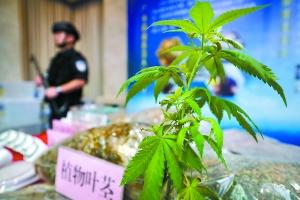 种植大麻还跨省贩卖?这伙人栽了……