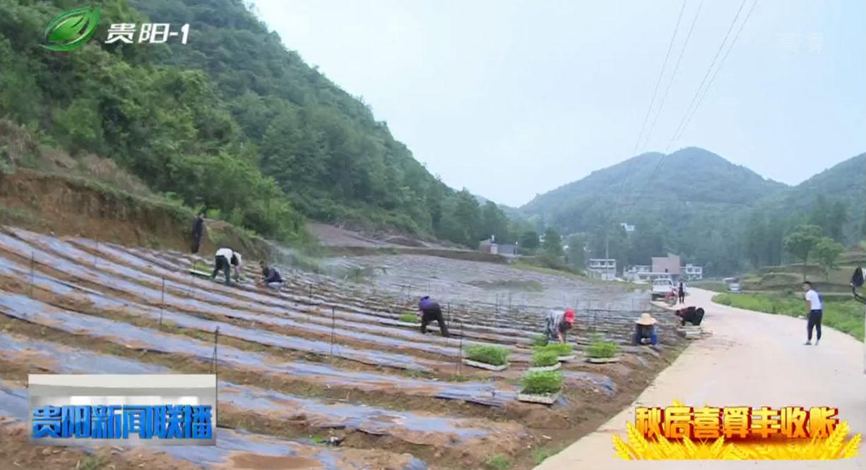 清镇市破岩村:多项产业齐发展  村民喜算丰收账
