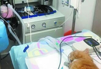 给宠物看病比人还贵? 缺标准无监管造成太任性