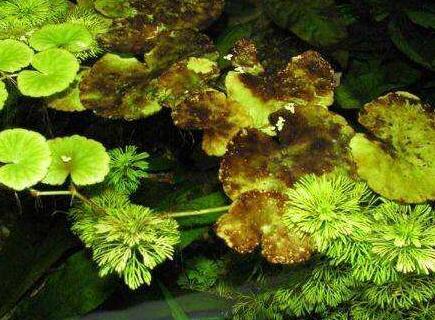 """硅藻为啥擅长""""捕光""""?中国科学家找到新机理"""