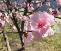 京城遍地姹紫嫣红